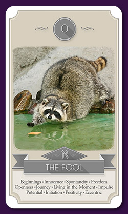 raccoon-tarot-13013