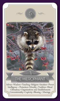raccoon-tarot-13016