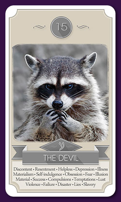raccoon-tarot-13019