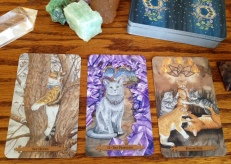 mystical-cats-tarot-05-card-samples