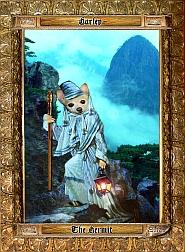 medieval-chihuahua-10292